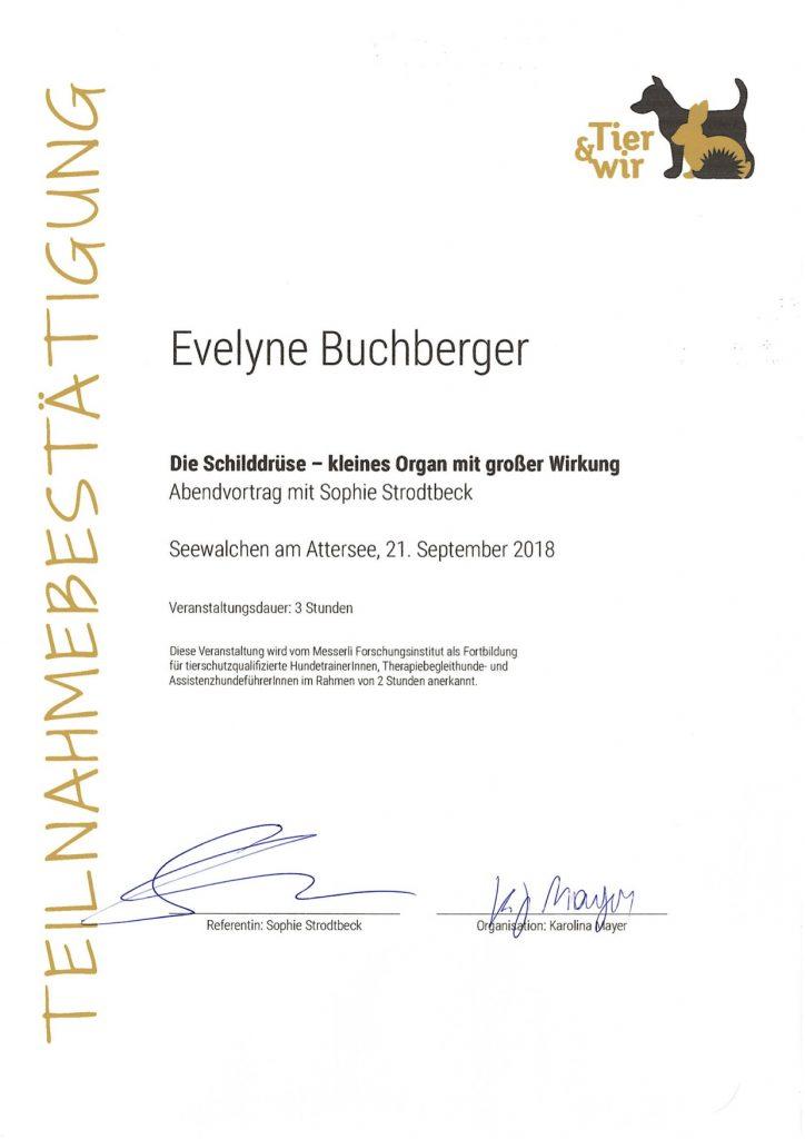 "Seminar ""Schilddrüse"" Sophie Strodtbeck"